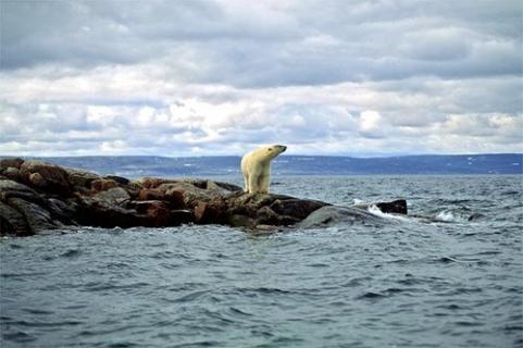 Los océanos se enferman a causa del calentamiento Global