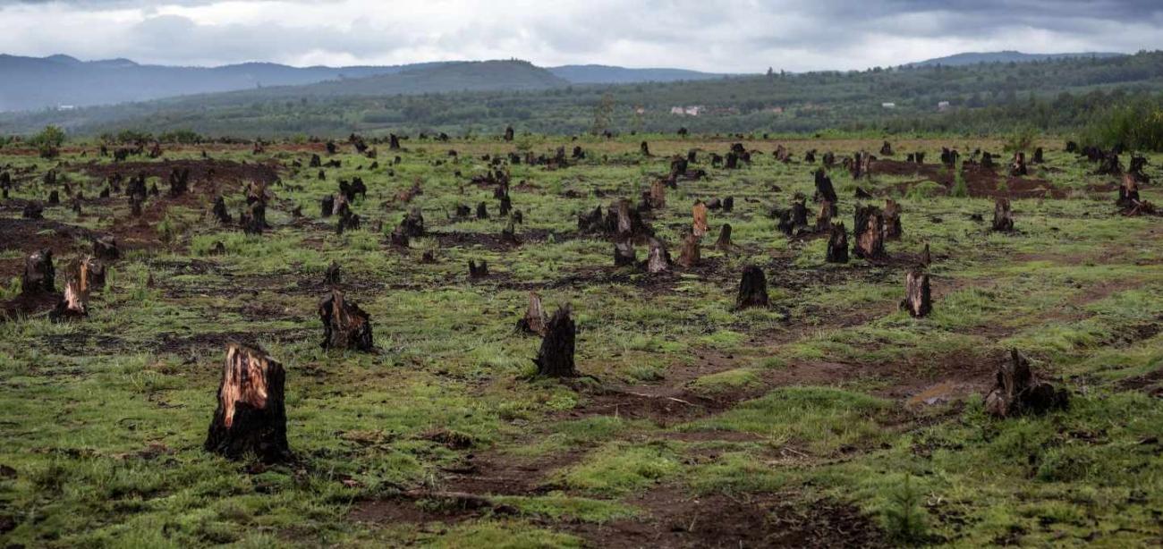 El planeta Tierra afronta amenaza de extinción de un millón de especies