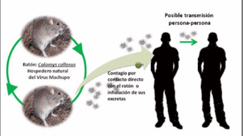 Arenavirus contagio a los médicos por la sangre de la enferma y no por vía aérea