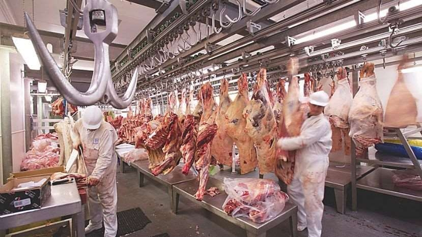 Abastecimiento de carne bovina para el mercado nacional está garantizado, se prioriza el consumo de las familias bolivianas y el excedente se destina a la exportación